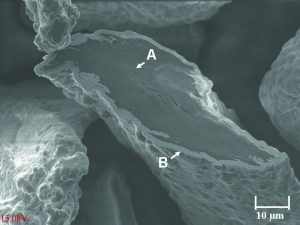 """Figure 1. The nickel graphite particles used in this work are fl akeshaped and have an average particle size of 120 microns. A crosssectioned particle in this scanning electron micrograph shows the graphite core """"A"""" and the surrounding nickel cladding """"B""""."""